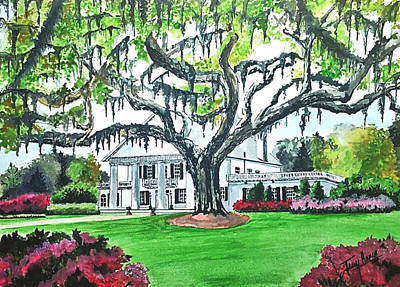 Tree Plantation Drawing - Orton Plantation by Terry Ganey