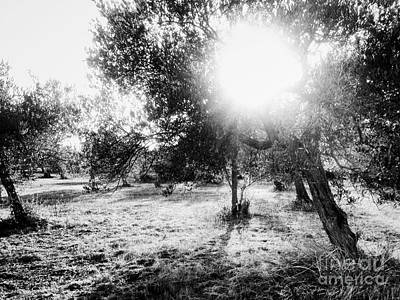 Photograph - Ortona Olive Grove by Angela Rath