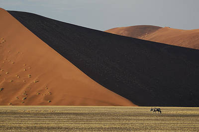 Hardap Region Photograph - Oryx And Dunes by Christian Heeb