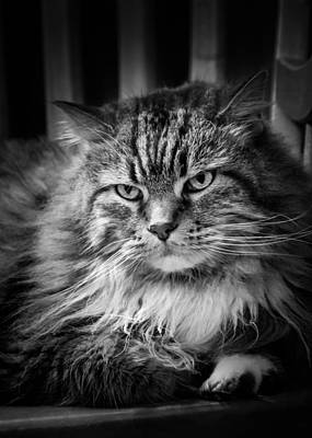 Photograph - Oscar The Cat by Joni Eskridge