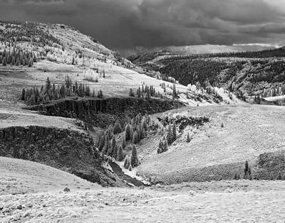 Photograph - Osier by Mike McMurray