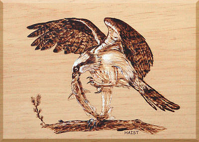 Pyrography - Osprey 3 by Ron Haist
