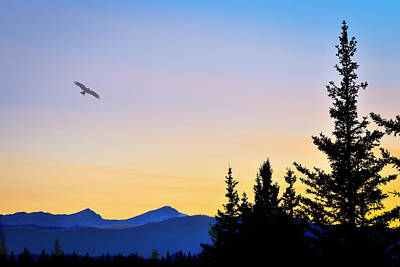 Photograph - Osprey Against The Sunset by Philip Rispin