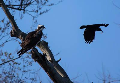Photograph - Osprey And Friend by Buddy Scott