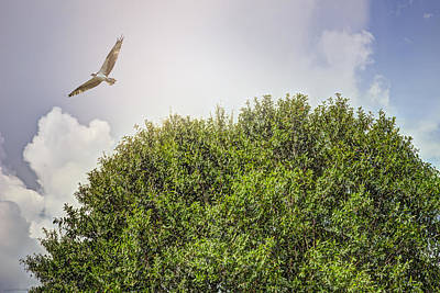 Clouds Photograph - Osprey And Tree by Louise Hill