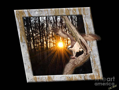 Osprey At Sunset  Black Art Print by Donna Brown