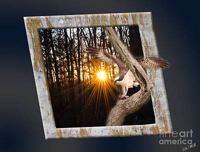 Photograph - Osprey At Sunset by Donna Brown