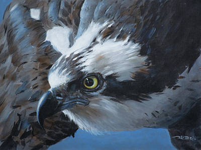 Osprey Painting - Seahawk by Christopher Reid