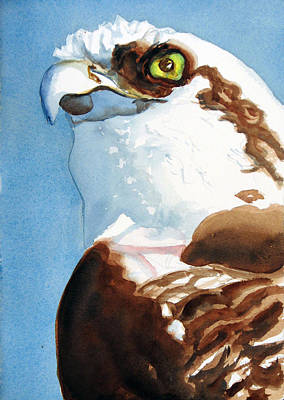 Painting - Osprey Eye by Libby  Cagle
