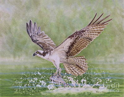 Osprey Drawing - Osprey Fishing by Elaine Jones