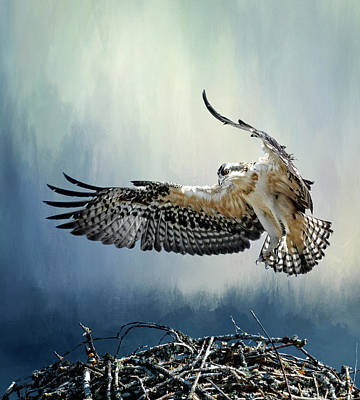 Photograph - Osprey Flight School by Wes and Dotty Weber