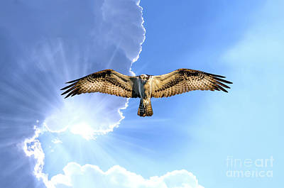 Photograph - Osprey Flying In Cloudy Sky With Sunrays Under The Wing by Patrick Wolf