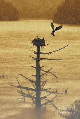 Photograph - Osprey Flying Up To Nest On Old Dead Tree In Water by Dan Friend