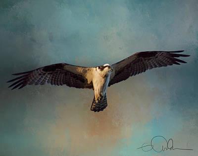 Digital Art - Osprey by Gloria Anderson