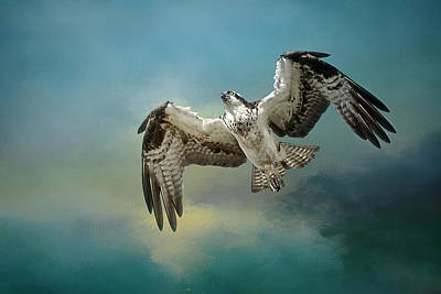 Photograph - Osprey In A Glide by Wes and Dotty Weber