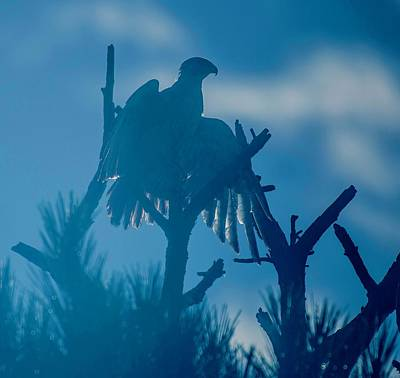 Photograph - Osprey In Blue by Mary Hahn Ward
