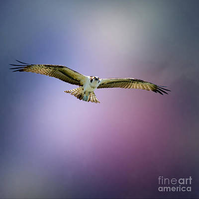 Interior Design Photograph - Florida Osprey by J Darrell Hutto