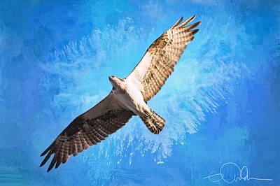 Digital Art - Osprey In Flight by Gloria Anderson