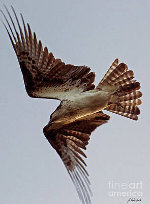 Photograph - Osprey In Flight-signed-#4012 by J L Woody Wooden