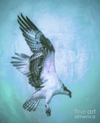 Osprey Mixed Media - Osprey by KaFra Art