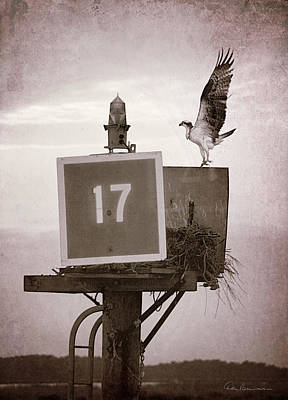 Best Sellers - Dan Beauvais Royalty-Free and Rights-Managed Images - Osprey Landing on Channel Marker 17 by Dan Beauvais