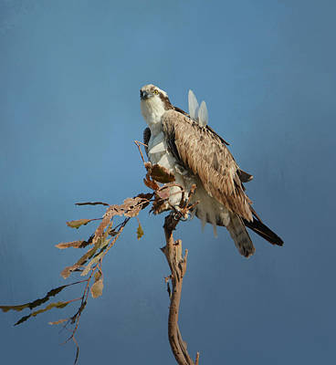 Photograph - Osprey Lookout 3 by Fraida Gutovich