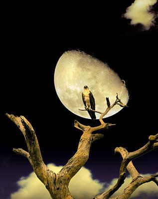 Moonlit Night Photograph - Osprey Moon by Mal Bray