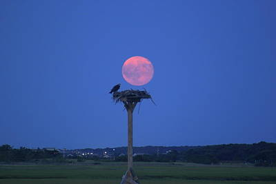 Photograph - Osprey Nest And Full Moon  by John Burk