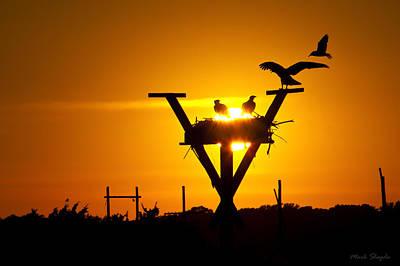Osprey Nest Silhouette Photograph - Osprey Nest At Sunset by Mark Shegda