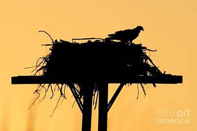 Osprey Nest Silhouette Photograph - Osprey Nest At Sunset by Robert Wilder Jr