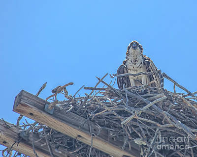 Photograph - Osprey Nest by Billie-Jo Miller