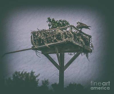 Photograph - Osprey Nest by Dale Powell