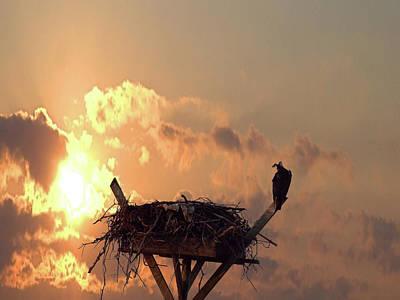 Photograph - Osprey by Newwwman