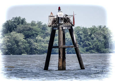 Photograph - Osprey On The Appomattox River by Melissa Messick