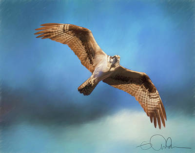 Digital Art - Osprey On The Hunt by Gloria Anderson