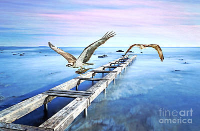 Osprey On The Move Art Print