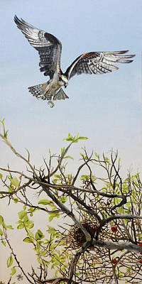 Fish-eye Look Painting - Osprey - One Flew Over The Cuckoo's Nest by Michelle Iglesias
