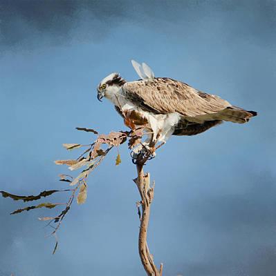 Photograph - Osprey Outlook 4 by Fraida Gutovich