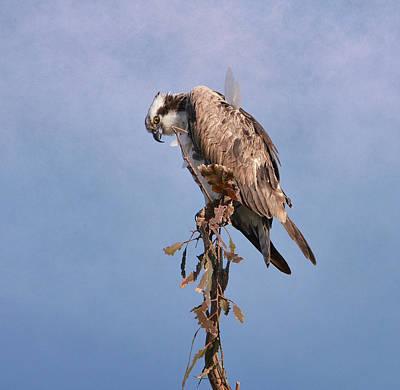 Photograph - Osprey Outlook 5 by Fraida Gutovich