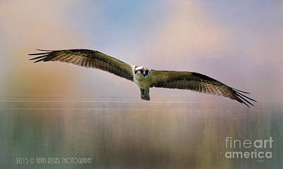 Osprey Over The Shenandoah Art Print