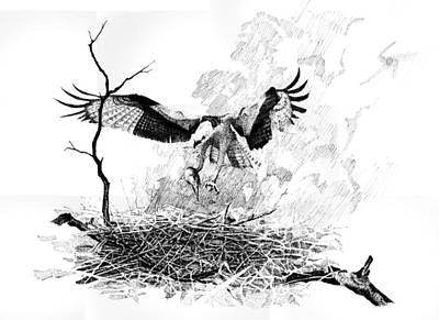 Osprey Art Print by Paul Illian