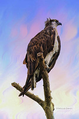 Photograph - Osprey Perch by Deborah Benoit