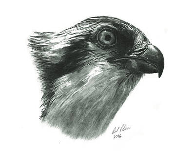 Osprey Art Print by Reed Palmer