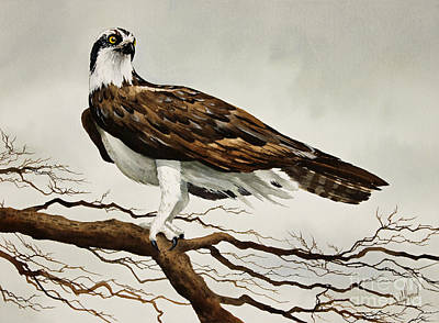 Osprey Painting - Osprey Sea Hawk by James Williamson