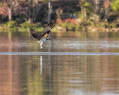 Photograph - Osprey Strike Out by Jemmy Archer