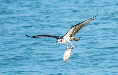 Photograph - Osprey Success by Jeff at JSJ Photography