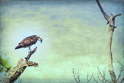 Photograph - Osprey Tree by Richard Goldman