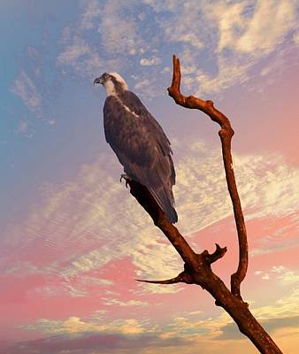 Photograph - Osprey With Branch by Buddy Scott