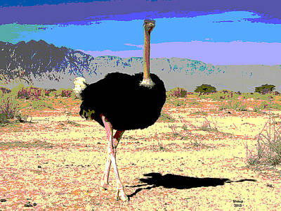 Sandpiper Mixed Media - Ostrich by Charles Shoup