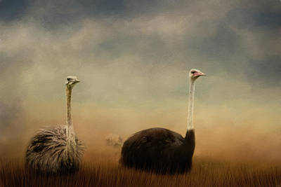 Ostrich Photograph - Ostrich Couple by Jai Johnson
